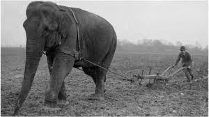 Elephant workhorse