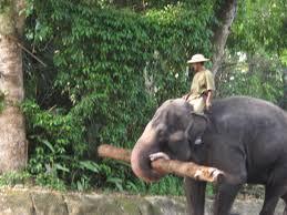 elephant working