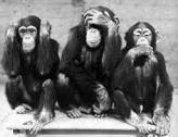 monkey tribunal